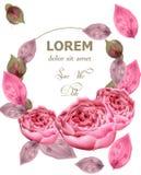 Delikatny różowy róża wianku wektor Akwareli kwiecisty tło Elegancja kwitnie tapetę Roczników dekoracyjni bukiety royalty ilustracja