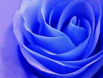 Delikatny rosebud błękita róży zbliżenie Fotografia Stock