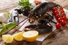 Delikatny surowy jedzenie: homar z warzywami i pikantność dla cookin obraz royalty free
