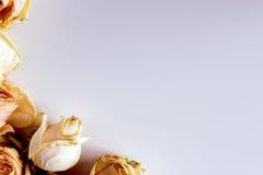 Delikatny tło z zatartymi różami w rocznika stylu Zdjęcie Stock
