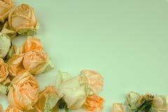 Delikatny tło z zatartymi różami w rocznika stylu Obraz Royalty Free