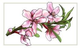 Delikatny wektor rysujący menchia koloru kwiaty ilustracja wektor