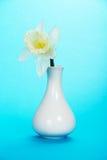 Delikatny wiosna kwiat w wazie na błękicie obrazy stock
