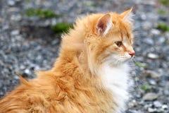 Delilah o gato da exploração agrícola Imagens de Stock