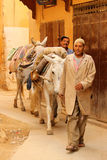Delivering goods on a donkey Royalty Free Stock Photography