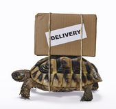 The slow delivery box on turtle. Delivery box tied on turtle,Slow delivery box concept on turtle on white background stock photo