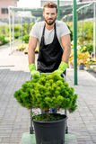 Delivery in the flowers shop. Handsome flower seller carrying a tree with trolley in the plant store. Customer service and delivery in the flowers shop Stock Images