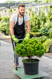 Delivery in the flowers shop. Handsome flower seller carrying a tree with trolley in the plant store. Customer service and delivery in the flowers shop Royalty Free Stock Images