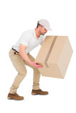 Delivery man crouching while picking cardboard box. On white background Stock Photography