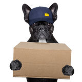 Delivery post dog stock photos