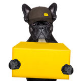 Delivery post dog Stock Photography