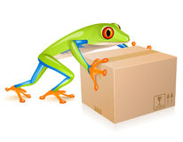 Delivery tree frog Stock Photos