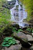 Dell'Acquacheta delle cascate di Casentino Forest Park Immagine Stock Libera da Diritti