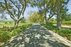Dell'azionamento vigna ombreggiata del vino di Constantia giù fuori di Cape Town, Sudafrica Fotografia Stock