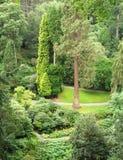 Dell im Bodnant Garten Stockfotografie