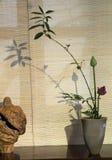 Dell'interno decori il loto conservato in vaso Fotografia Stock