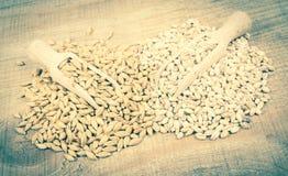 Dell'orzo o cereali ed orzo perlato Immagine Stock Libera da Diritti