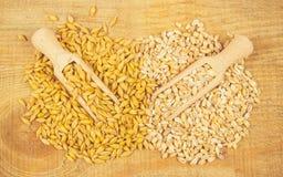 Dell'orzo o cereali ed orzo perlato Fotografie Stock