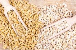 Dell'orzo o cereali ed orzo perlato Immagine Stock
