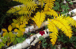 Della foresta vita ancora Fotografia Stock
