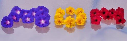` della MAMMA del ` di parola sistemato dai fiori immagine stock
