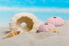 Della spiaggia vita ancora immagine stock libera da diritti