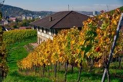 Della vigna di file del vino autunno cambiante di caduta di stagioni di giorno all'aperto Fotografia Stock