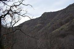 ` delle rocce blu del ` del parco naturale - Bulgaria, Sliven Immagine Stock