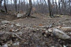 ` delle rocce blu del ` del parco naturale - Bulgaria, Sliven Fotografia Stock