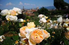 Delle Rosa de Giardino em Florença, Toscânia, Itália Foto de Stock