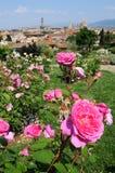 Delle Rosa de Giardino em Florença, Toscânia, Itália Fotografia de Stock