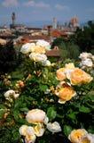 Delle Rosa di Giardino a Firenze, Toscana, Italia Immagine Stock Libera da Diritti