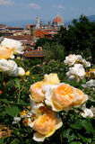 Delle Rosa di Giardino a Firenze, Toscana, Italia Fotografia Stock