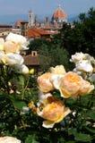 Delle Rosa di Giardino a Firenze, Toscana, Italia Immagine Stock