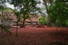 Delonix regia Petals spread all over backyard of Old bungalow stock images