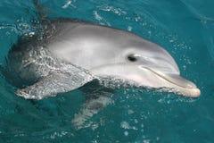 Delphin Stockfotografie