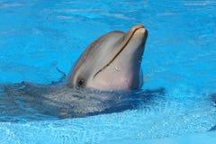 Delphin stockbild