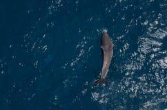 delphin Stockbilder