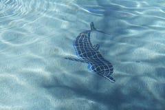 delphin Stockfoto