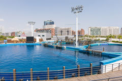 Delphin acquarium Stockfotografie