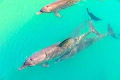 Delphin-Affe Mia Stockfotos