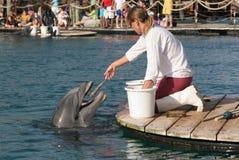 Delphin, der die Fische abfängt Lizenzfreie Stockbilder