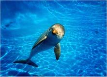 Delphin, der die Kamera betrachtet lizenzfreies stockbild