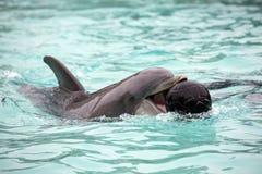 Delphin, der mit einem Ball spielt Stockfoto