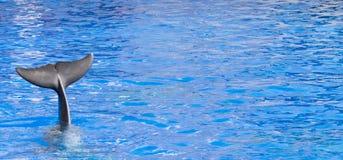 Delphin, der mit Endstück zum Abschied winkt Lizenzfreies Stockfoto