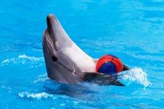 Delphin, der mit Kugel im blauen Wasser spielt Lizenzfreies Stockbild