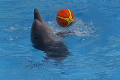 Delphin, der mit Kugel spielt Lizenzfreies Stockbild