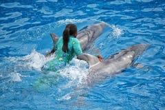 Delphin, der mit Trainer an der Seewelt in San Diego durchf?hrt lizenzfreie stockfotos