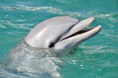 Delphin, der nah oben lächelt Stockbild