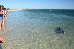 Delphin-Erfahrung Affe Mia Haifisch-Bucht Sein gelegen auf Wellington-Straße und war im November 2012 geöffnet Lizenzfreies Stockfoto